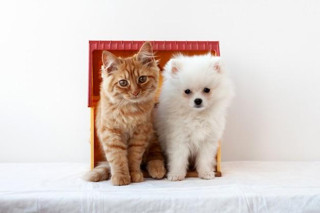 Маленький белый пушистый щенок померанского шпица и маленький рыжий котенок сидят бок о бок в игрушечном домике и смотрят в камеру.