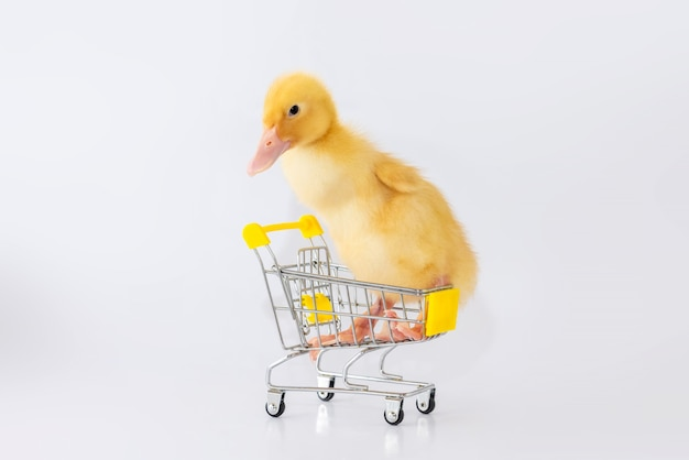작은 노란색 오리 화이트에 고립 된 작은 쇼핑 카트에 앉는 다.