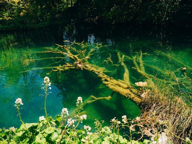 플리트 비체 호수 국립 공원 크로아티아의 물속에 걸려 들다