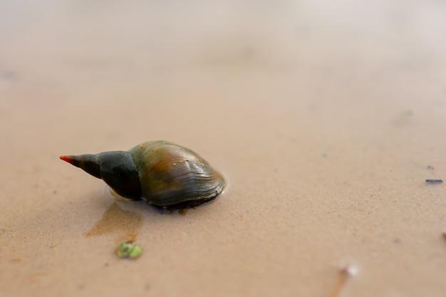 美しい貝殻のカタツムリが砂のある湖に座っています
