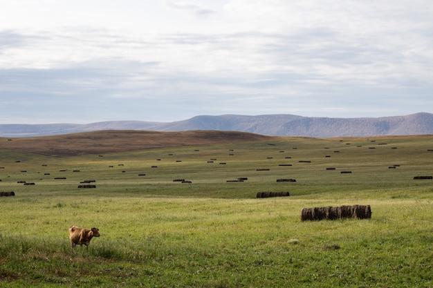 牛が放牧する広々とした緑地。