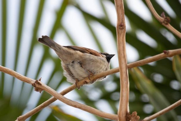 Воробей на ветке дерева ранней весной. маленькая серая птичка на природе
