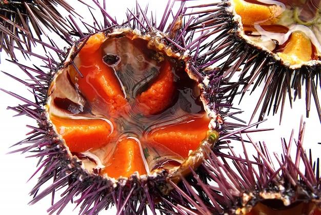 ウニの一種、紫ウニ