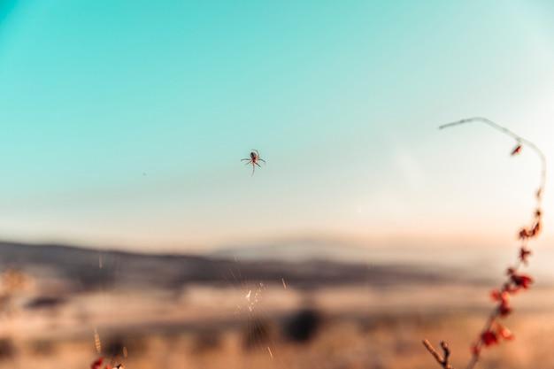 自然の中でこのように作成するクモ