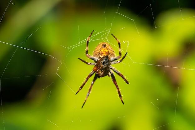Паук в паутине в тропическом лесу