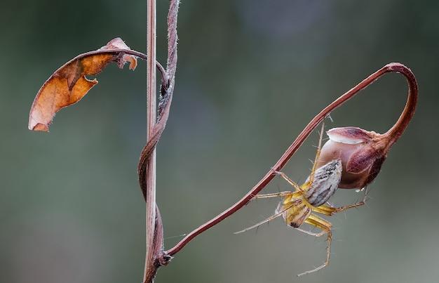 식물에 거미