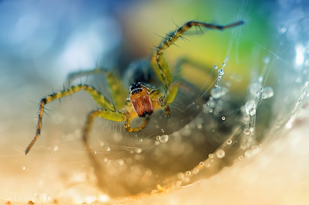 Паук на паутине с каплями