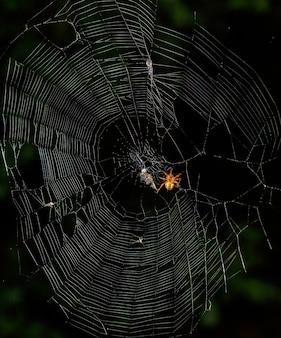 덫에 걸린 곤충이 있는 거미줄