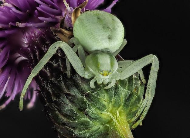 거미는 꽃에 앉아