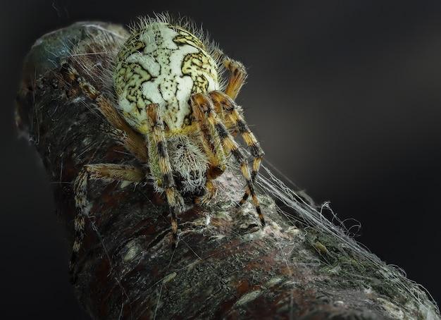 거미는 꽃에 앉아 프리미엄 사진