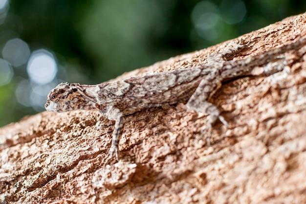 Пятнистая ящерица прячется, как кора на стволе дерева. выборочный акцент на голове. красиво размытый зеленый фон.