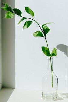 自然光の白い窓辺にある小さな花瓶に緑の植物の小枝1