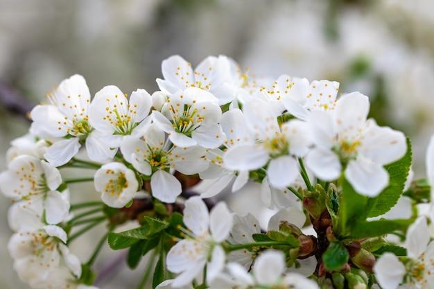 青い空を背景に春の開花枝