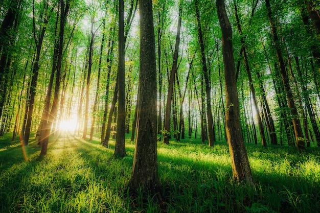 春の森の木々。自然の緑の木の日光の表面。