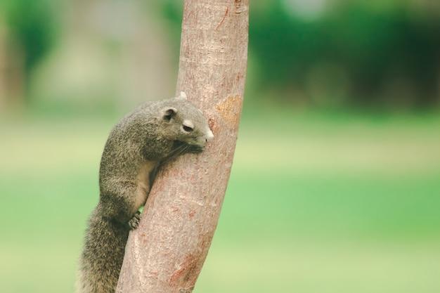 Белка на ветке, белки - это маленькие млекопитающие с мехом, покрывающим все тело.