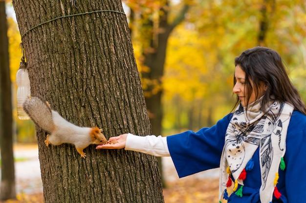 Белка, сидящая на стволе дерева, берет орехи из рук человека в осеннем парке.