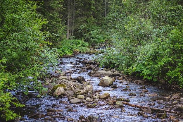 木々の間の山々の急な小川_