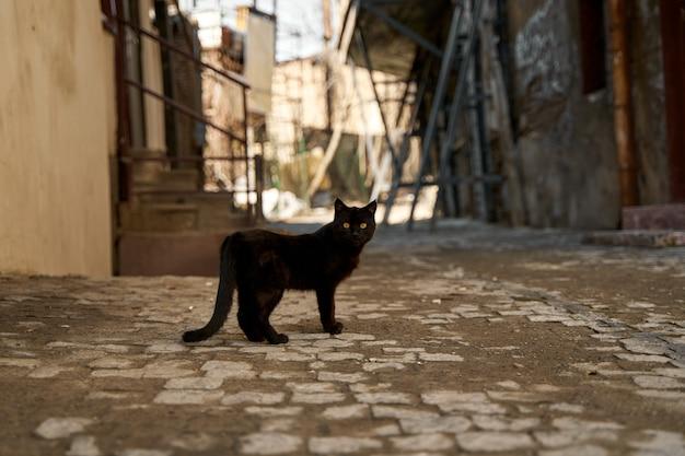 По аллее ходит бездомная черная кошка.