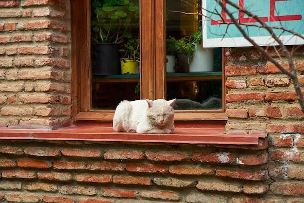 Бродячая кошка греется на солнышке. уличные животные в городе.