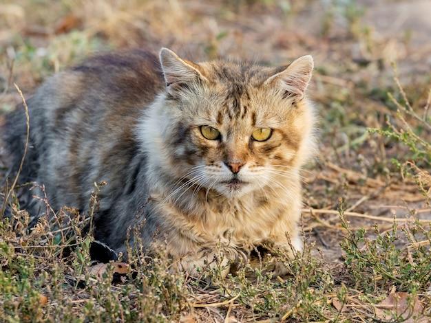 Бродячая кошка сидит на траве осенью в солнечный день