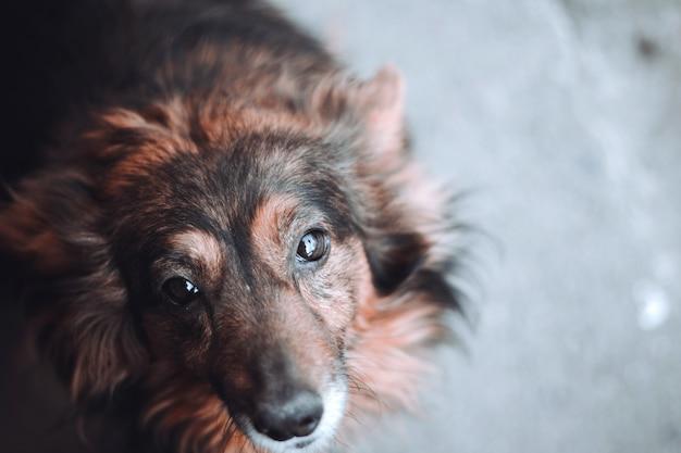 Бродячая собака смотрит прямо в объектив
