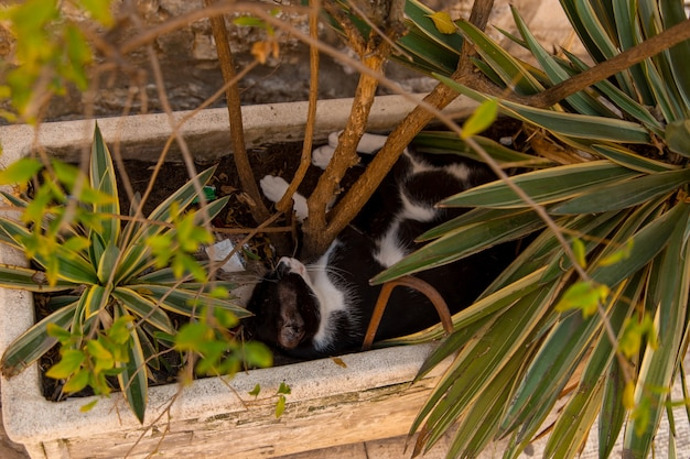 Уличный кот спит на клумбе, спасается от жары.