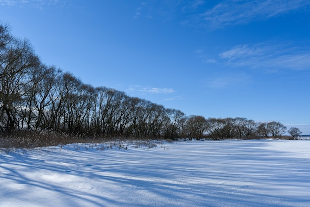 凍った湖のほとりにある一片の木。