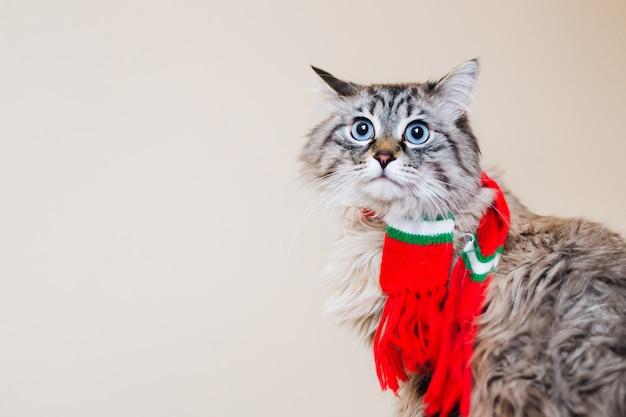 首に赤いスカーフをかぶった縞模様の猫は、壁の背景に対してカメラを見ています