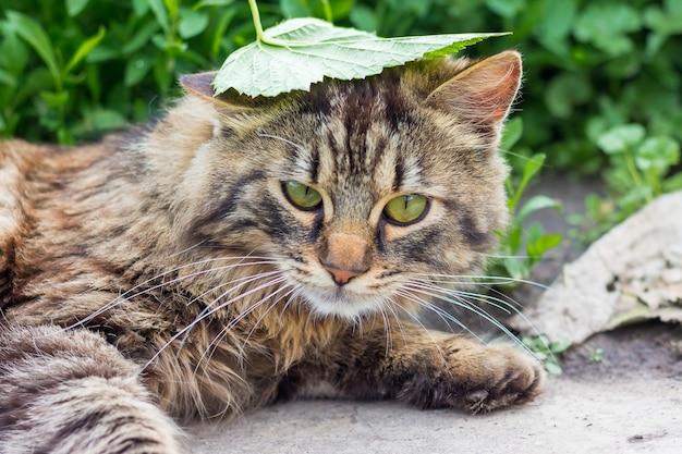頭に緑の葉が付いた縞模様のふわふわ猫が草の中に横たわっています
