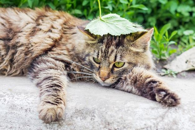 Полосатый пушистый кот с зеленым листом на голове лежит в зеленом