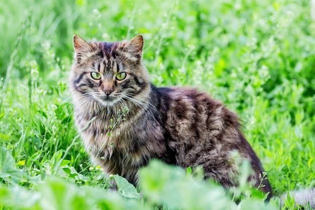 草の上に座っている緑色の目を持つ縞模様のふわふわ猫