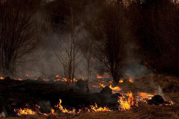 Сильный огонь распространяется в порывах ветра сквозь сухую траву, дымящуюся сухую траву, концепцию огня и горение леса.