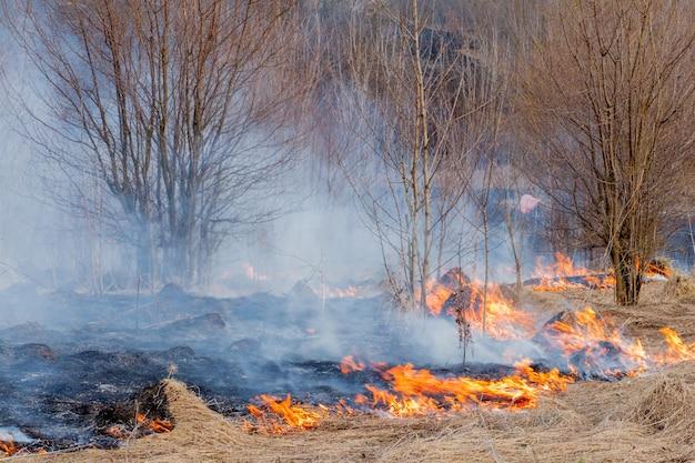 強い火は、乾いた草、乾いた草を吸うこと、火の概念と森の燃焼を通して突風の中で広がります