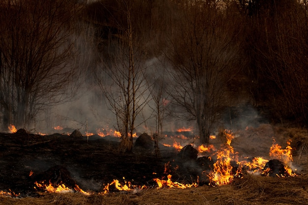 Сильный огонь распространяется порывами ветра по сухой траве, дымящейся сухой траве