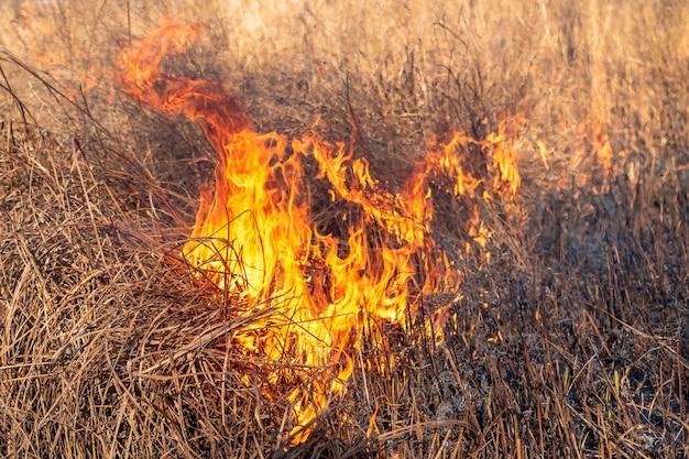 거센 불은 마른 풀 사이로 돌풍으로 번져