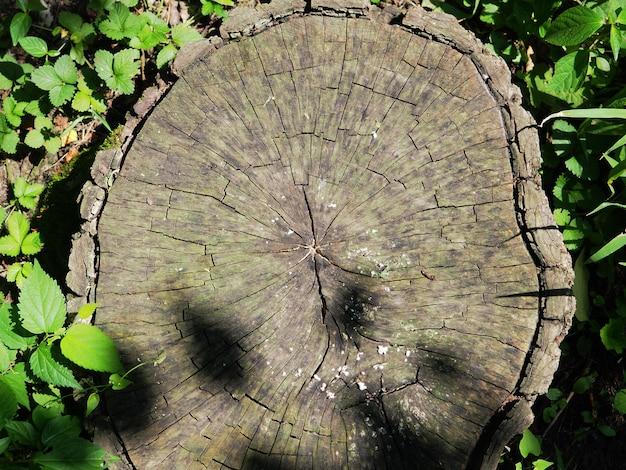 Пень в осеннем или летнем лесу как подиум для товарного дизайна, срубленное дерево и размытый фон как баннер для демонстрации товара