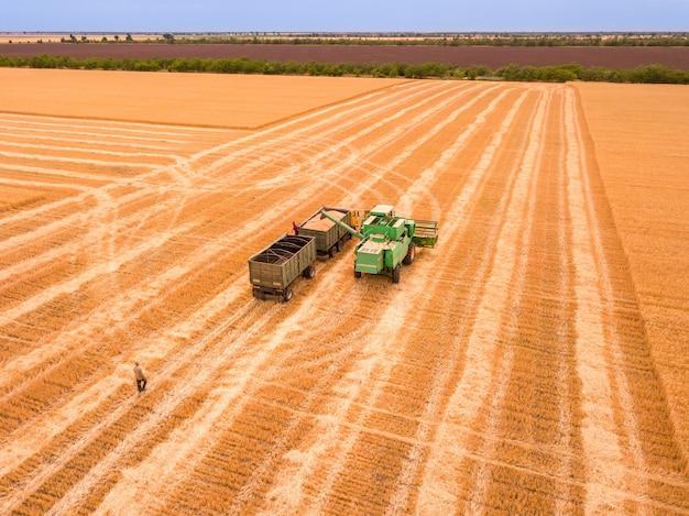 현장에서의 여름날. 곡물 수확.