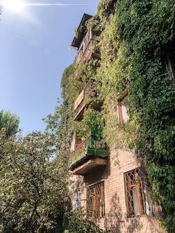 화창한 날과 발코니가 담쟁이 덤불과 얽혀있는 도심의 믿을 수 없을만큼 푸른 오래된 집. 환경 보호 및 생태 개념입니다.