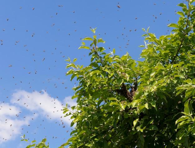 나뭇가지에 앉아 있는 꿀벌 떼와 하늘을 배경으로 하는 많은 개별 꿀벌. 꿀벌 낚시, 양봉, 번식 및 꿀벌 관리의 개념.