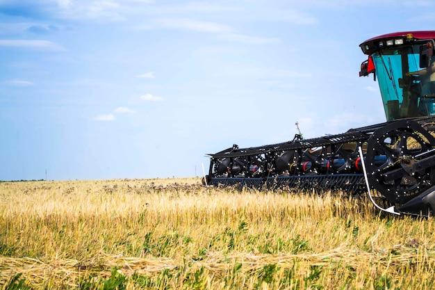 Валкователь подрезает пшеничное поле рядом