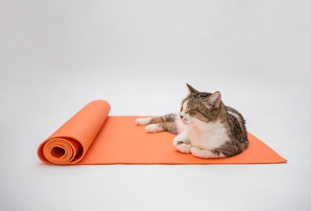 トラ猫が白いスペースのヨガマットで寝ています。大人の猫がオレンジ色のフィットネスマットで寝ています。コピースペース