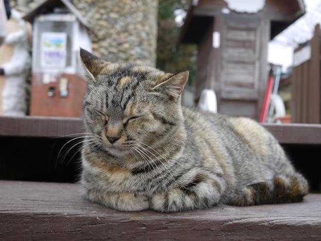 Полосатый короткошерстный кот отдыхает на ступеньке. крупным планом - милый котенок.
