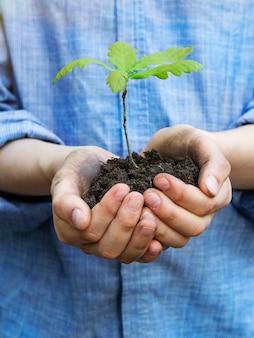 ティーンエイジャーは彼の手のひらにオークの苗を保持しています。コンセプト-森林再生、環境に優しい。地面と手。晴れた日。