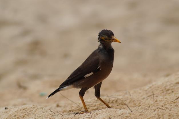 傾いた鳥が砂浜を歩きます。タイのビーチの鳥