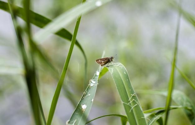 정글의 풀잎에 앉아 있는 작은 갈색 나비