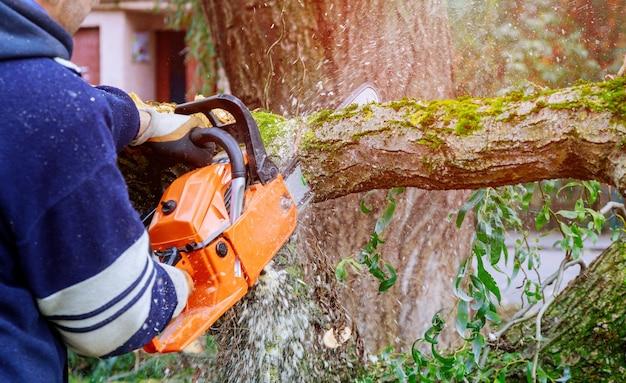 激しい嵐の後、倒れた木のチェーンソーを使って木の枝を切っています。