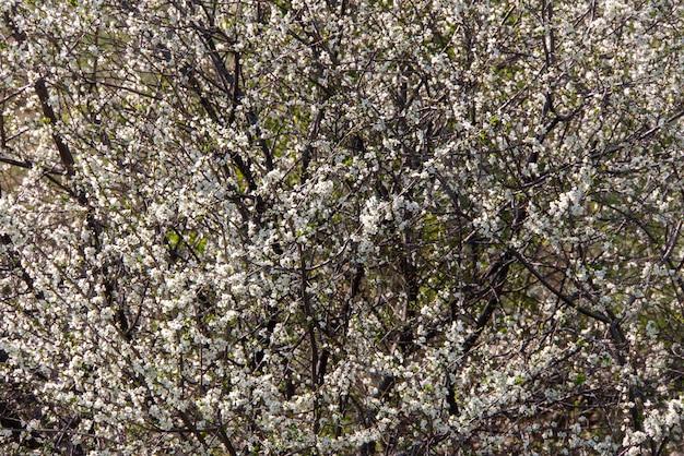 Дерево, цветущее белыми цветами.