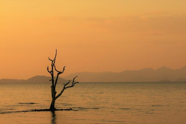 Ветвь дерева в море во время заката с красивым оранжевым небом и некоторым островом вдали