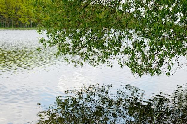 緑の葉のある木の枝が川の澄んだ水に映る