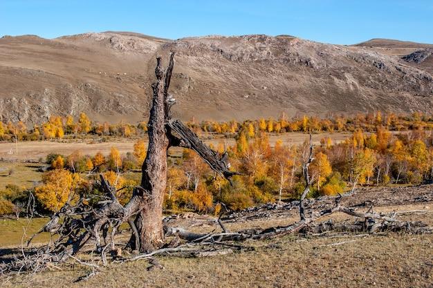 Дерево взорвалось от молнии. сломанный ствол дерева в горах осенью. высокие холмы на заднем плане. голубое небо. по горизонтали.